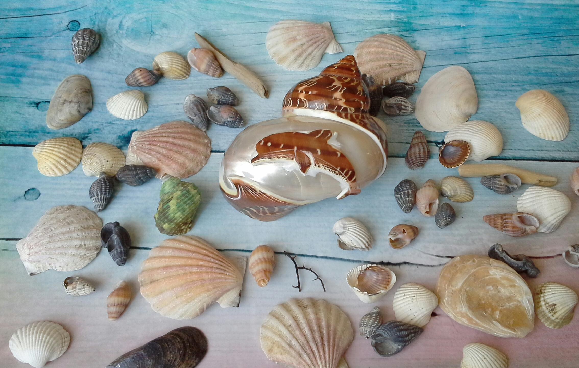 Морской натуральный декор. Кораллы и ракушки.