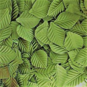 Листья зеленые для флористики и скрапбукинга.