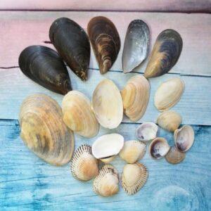 Морские ракушки №1, 20 шт., 2-7 см, 50 г.